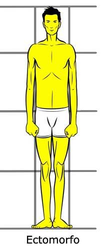 Los mass gainer se suelen recomendar a ectomorfos puros que tienen mucha dificultad para engordar.